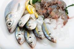 Vareity of Fresh Sea Food. Frozen Fresh Fish, Sea Bass, and Prawn with ice and lemon Stock Photo