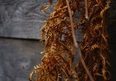 varen braun kleur het vernietigen close-up van de de herfst het houten muur Stock Foto