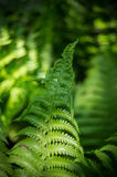 Varen in het bos Stock Afbeeldingen
