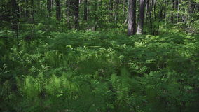 Varen in het bos stock video