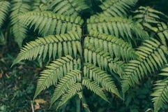 Varen leavesï blad ¼ Œlush in bos royalty-vrije stock afbeeldingen