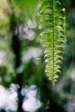 Varenblad met waterdalingen Royalty-vrije Stock Foto