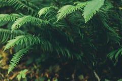 Varenblad op de bos, natuurlijke achtergrond royalty-vrije stock foto