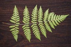 Varenblad op donker hout Royalty-vrije Stock Fotografie