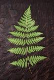 Varenblad op donker hout Royalty-vrije Stock Foto's