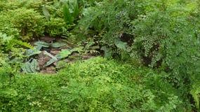 varenbladeren bij regenwoud Royalty-vrije Stock Foto's