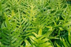 Varenbladeren in de tuin Royalty-vrije Stock Foto's