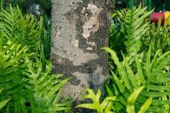 Varenbladeren in de tuin Stock Afbeelding