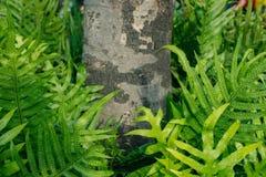 Varenbladeren in de tuin Stock Fotografie