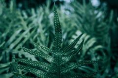 Varenbladeren in de tuin Royalty-vrije Stock Afbeelding