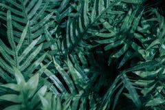 Varenbladeren in de tuin Royalty-vrije Stock Fotografie
