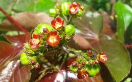 Varenda de fleur Photographie stock libre de droits