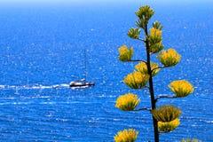 Varende boot, gele bloemen en blauwe overzees Stock Fotografie