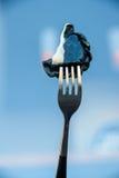 Varenik russe noir de boulette sur la fourchette image libre de droits