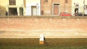 Varenne-Kanal in der Mitte von Mailand mit seinen Enten und Schildkröten stock video footage