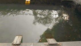 Varenne-Kanal in der Mitte von Mailand mit seinen Enten und Schildkröten stock video