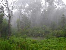 Varens en palmen bij mangroveregenwoud, Borneo, Maleisië royalty-vrije stock foto's