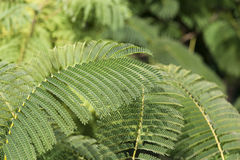 Varens in het groene bos, Royalty-vrije Stock Foto