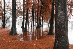 Varese Lake, overflow in the public park Zanzi Stock Images