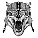 Varg lös djur bärande motorcykel för hund, aero hjälm Cyklistillustration för t-skjortan, affischer, tryck vektor illustrationer