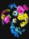 Variété colorée de fleurs image libre de droits
