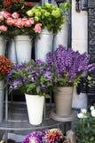 Variété colorée de fleurs Photos stock