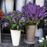 Variété colorée de fleurs Images libres de droits
