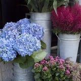 Variété colorée de fleurs image stock