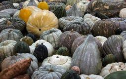 Variété d'idéal vert, gris, jaune de courges de potirons comme fond de nourriture Images libres de droits