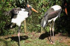 Variété d'oiseaux colorés, Singapour Images stock