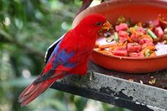 Variété d'oiseaux colorés, Singapour Photos stock