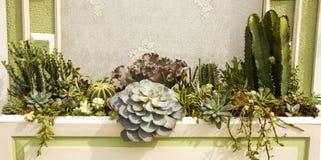 Variété d'usines de cactus dans un planteur image stock