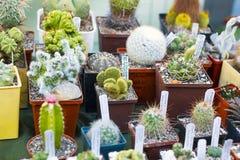 Variété de cactus et de succulents dans des pots à vendre Photos stock