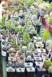 Variété de cactus et de succulents dans des pots Images libres de droits