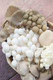 Variété de champignons frais dans un panier image stock