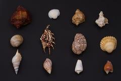 Variété de coquillages Image libre de droits