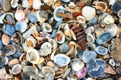 Variété de coquilles de mer Photographie stock libre de droits
