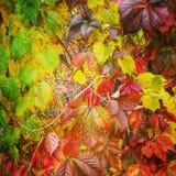Variété de couleurs de chute images stock