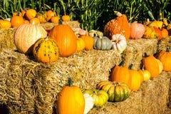 Variété de courge et de potirons pour Halloween Photo stock