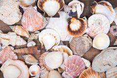 Variété de différentes coquilles de mer images stock