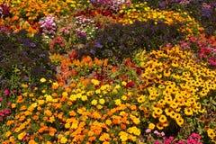 Variété de fleurs Image stock