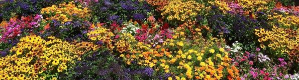 Variété de fleurs Image libre de droits