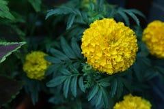 Variété de fleurs colorées avec un arome régénérateur en nature image stock