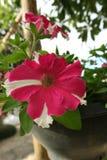 Variété de fleurs colorées avec un arome régénérateur en nature photo stock