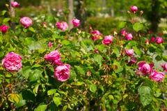 Variété de fleurs dans les domaines Image libre de droits