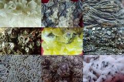 Variété de minerais images libres de droits