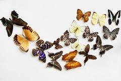 Variété de papillons Image libre de droits