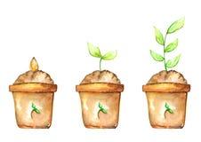 Variété de plantation de pot Photos libres de droits