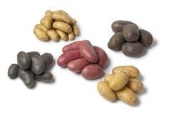 Variété de pommes de terre d'héritage images libres de droits