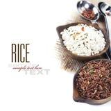 Variété de riz Photos stock